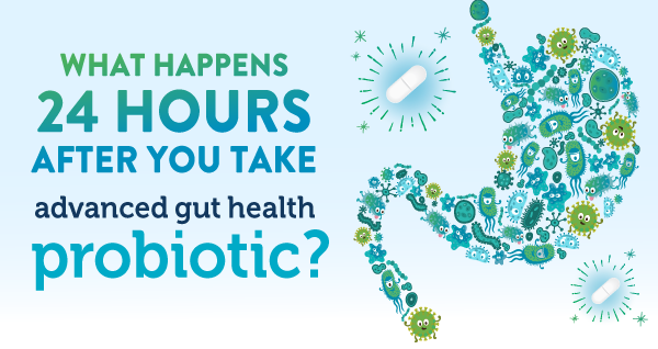 What happens 24 hours after you take our Advanced Gut Health Probiotic?