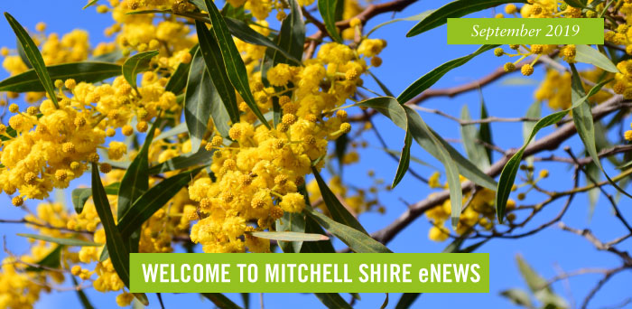 Yellow wattle flowers against a blue sky