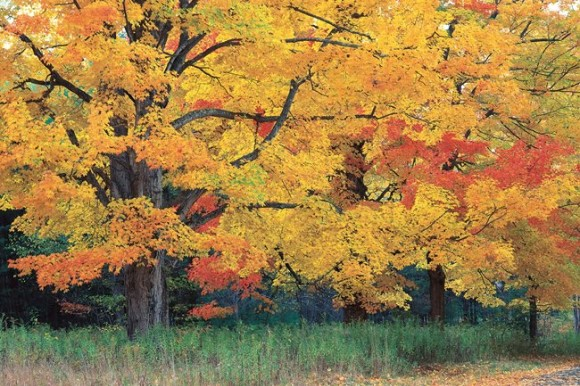 Trees with yellow and red leaves