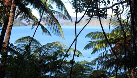 Ship Cove, Marlborough Sounds