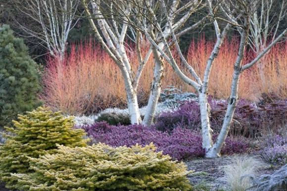 Colorful winter garden