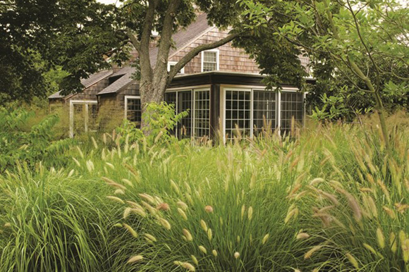 Swaths of grasses at property on Long Island