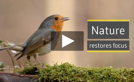 Nature restores focus