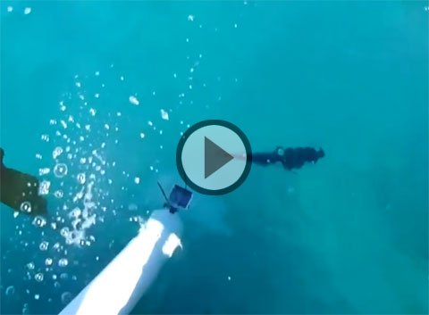 Blue cod waterslide