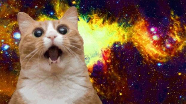 Cat Galaxy