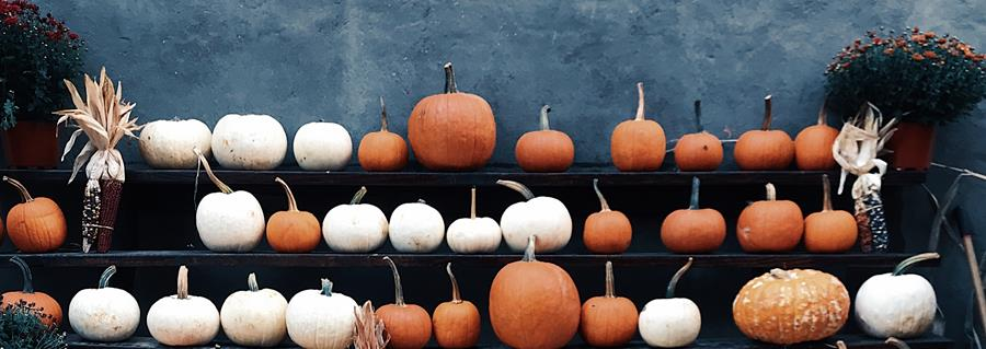 Shelves covered with pumpkins and gourds
