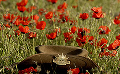 Slough Hat in field of poppies