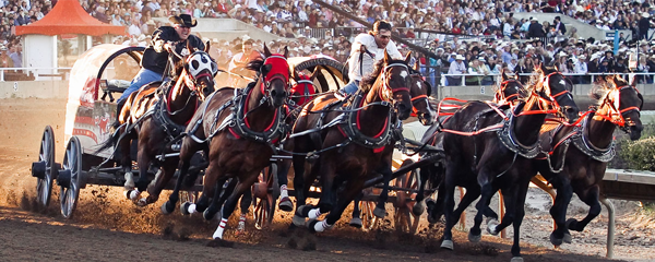 What does the 2018 Chuckwagon Canvas Auction tell us about Calgary's economy?