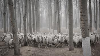 When the herds get spooked, this is what a stock-market crash might look like