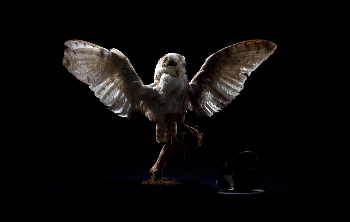 Brook Andrew, Owl, Replicant Series, 2005. Ilfochrome print. Courtesy of Wesfarmers Collection.