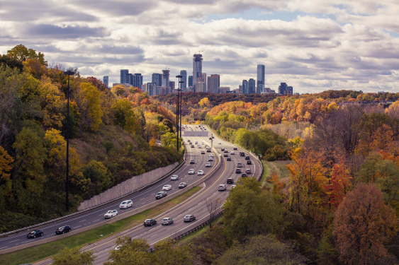 Skyline with trees in the fall