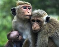 MonkeyFamily.204547