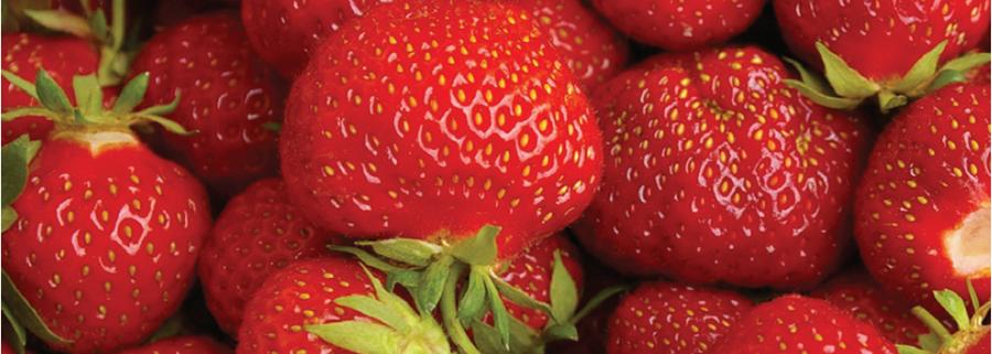 Bury Lane Farm Shop Home Grown Strawberries