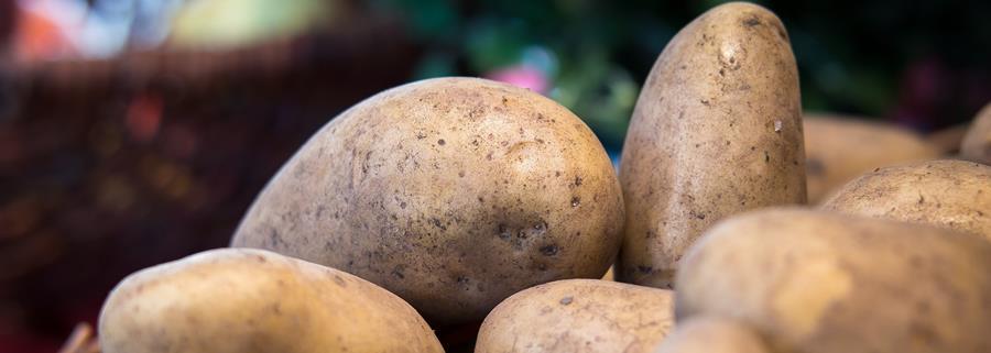 Bury Lane Farm Shop Potatoes October 2018