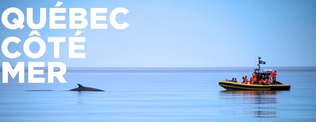 Observation des baleines avec Croisières AML