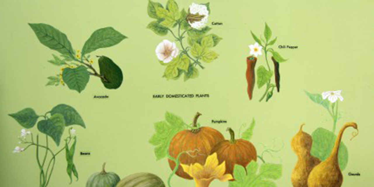 Image of early domesticated plants