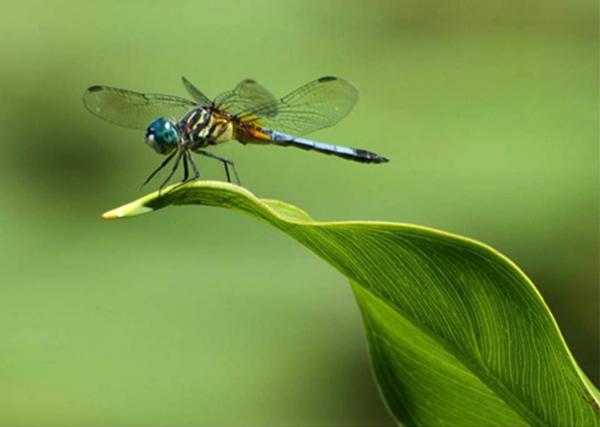 """Dragonfly"" by Karen Link"