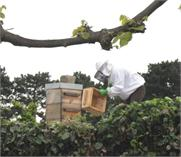 Beehives for Saint Sever Cemetery and Extension