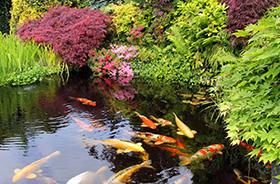 Kerti tó, kerti tavi termékek