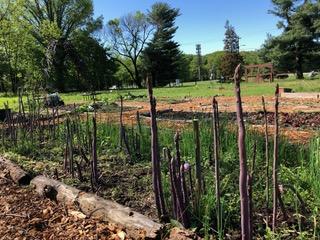 Endicott Community Garden