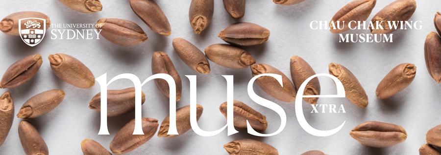 Muse Extra, Chau Chak Wing Museum, University of Sydney. Wheat grains from Tutankhamun'stomb.