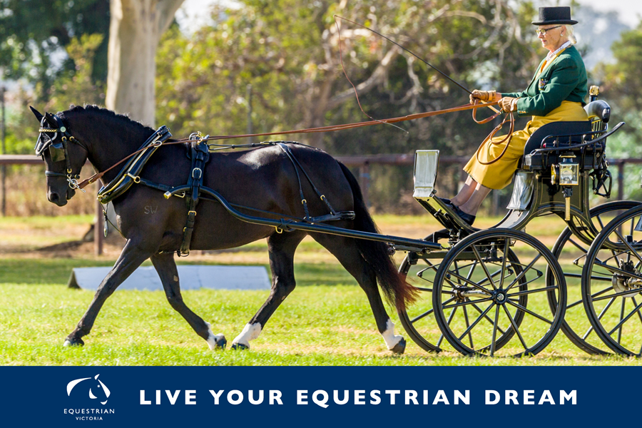 Carriage Driving at the 2019 EV Masters Games. Image courtesy of: Equine Images Victoria