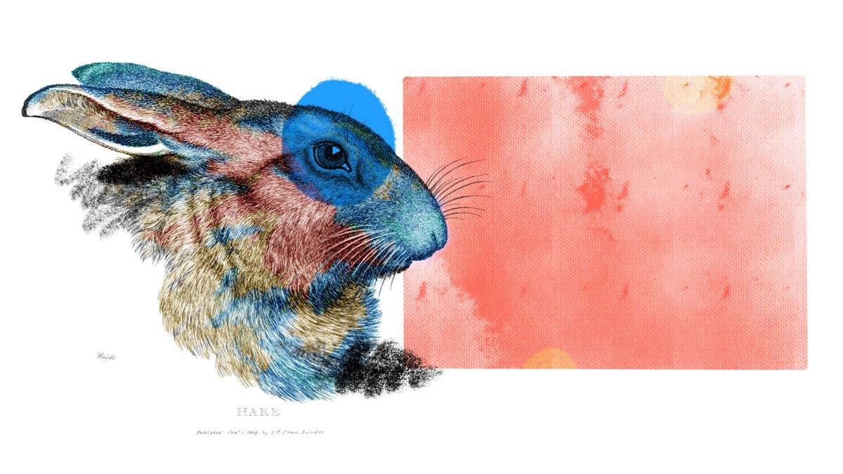 An illustrated rabbit in profile.
