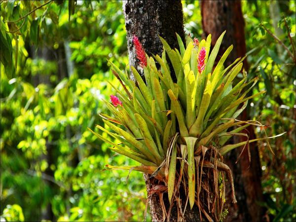Bromeliad and forest, El Pantanoso. © Fundación Biodiversidad-Argentina.