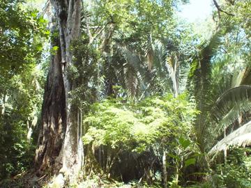 Belize forest. © WLT/ Christina Ballinger.