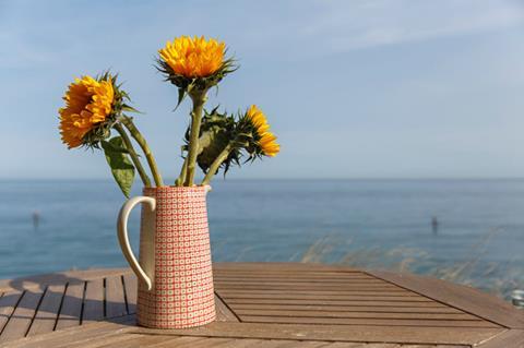 Beachside flowers