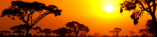 IFoA Africa Newsletter