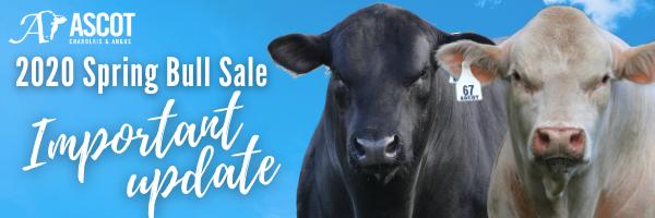 Spring bull sale open day