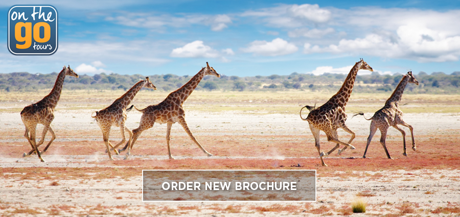 New Africa brochure