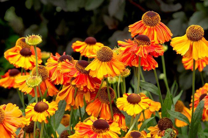 Happy Garden - Cover