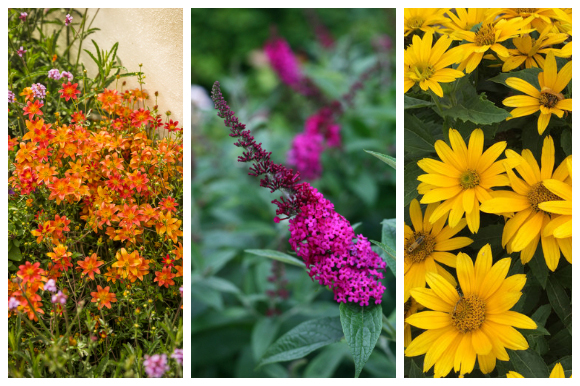 Blooming plants for pollinators