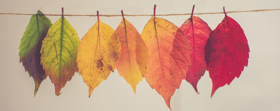 Fall leaves hanging on a string