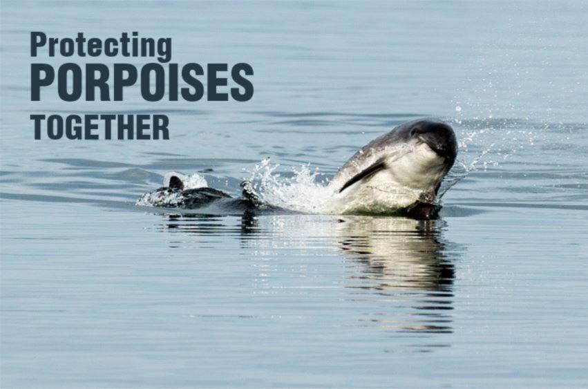 A breaching porpoise