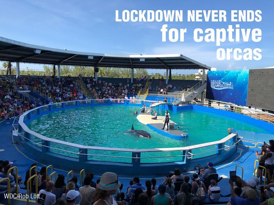 Help us end captivity