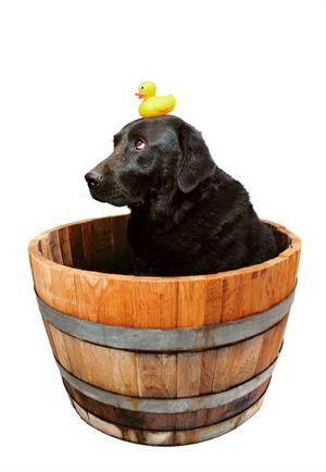 Dog & Rubber Duck having a bath