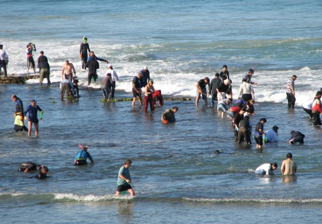 Recreational abalone fishers on a reef